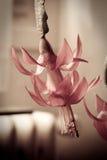 kwiat fuksja Zdjęcie Stock