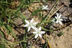 kwiat góry white Fotografia Royalty Free