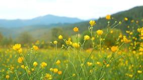 Kwiat góry zmierzch zbiory