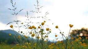 Kwiat góry zmierzch zbiory wideo