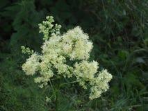 Kwiat gałązka, biała w zieleni fotografia stock