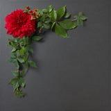 Kwiat granicy projekt Obraz Royalty Free