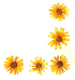 kwiat graniczny Zdjęcie Stock