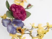 kwiat graniczny Obraz Stock