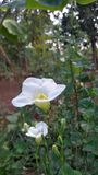 Kwiat i biel Fotografia Royalty Free