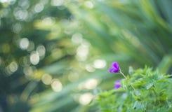 Kwiat i bokeh Zdjęcia Stock
