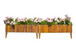 Kwiat i drewniany garnek na bielu Obrazy Stock