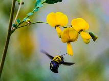 Kwiat i insekt obrazy stock
