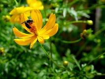 Kwiat i insekt Zdjęcie Royalty Free