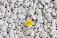 Kwiat i kamienie obrazy royalty free