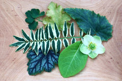 Kwiat i liść Obraz Royalty Free