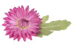 Kwiat i liść zdjęcia stock