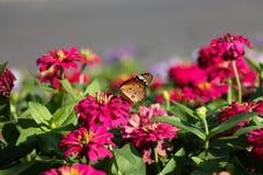Kwiat 88 i motyl Zdjęcia Royalty Free