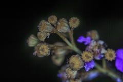Kwiat i mrówka Zdjęcie Royalty Free