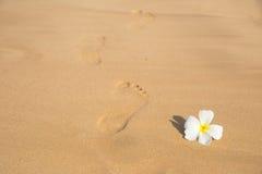Kwiat i odcisk stopy Zdjęcie Stock