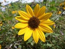Kwiat i ogród Obrazy Stock