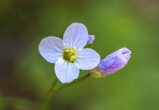 Kwiat i pączek Zdjęcia Royalty Free