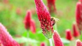 KWIAT I pszczoła zbiory