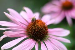 KWIAT I pszczoła obraz royalty free
