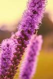 Kwiat i pszczoły Zdjęcia Stock