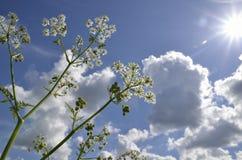 Kwiat i słońce Zdjęcie Royalty Free