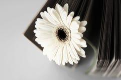 Kwiat i stary album puste miejsce fotografii lub książki Obrazy Royalty Free