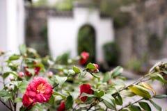 Kwiat i stary budynek Fotografia Royalty Free