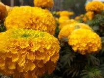 Kwiat i życie, Zdjęcia Royalty Free