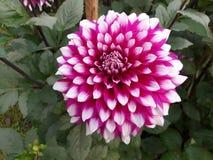 Kwiat i życie, Obraz Stock