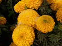 Kwiat i życie Obrazy Royalty Free