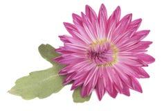 Kwiat i zieleń płatek obrazy royalty free