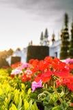 Kwiat i ziemia Zdjęcie Royalty Free
