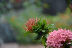 Kwiat, igła Zdjęcia Stock