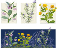 kwiat ilustracje ilustracji
