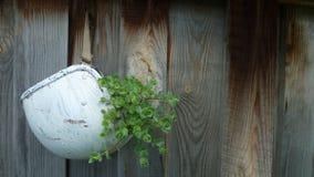kwiat izolacji white trawy Obraz Stock