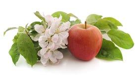 Kwiat jabłko i jabłko zdjęcia stock
