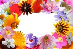 Kwiat jaskrawy rama Obrazy Royalty Free