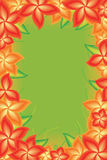Kwiat jaskrawy - zielona rama Obraz Stock