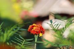 kwiat jeden Zdjęcia Stock