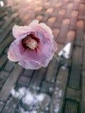 Kwiat kłama na odbijającym szkło stole obrazy royalty free