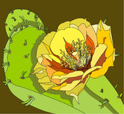 kwiat kłująca bonkreta Zdjęcie Royalty Free