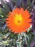 kwiat kaktusa z ogniska wybranych phpto up Zdjęcia Royalty Free