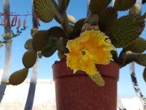 kwiat kaktusa z ogniska wybranych phpto up Obraz Stock