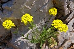 kwiat kamień Obrazy Stock