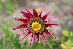 Kwiat końcówka Kanada Obrazy Royalty Free