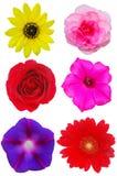 kwiat kolekcja Obraz Stock