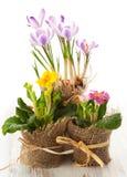 kwiat kolorowa wiosna Fotografia Stock