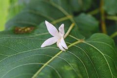 Kwiat kropelki na liściach Zdjęcia Stock