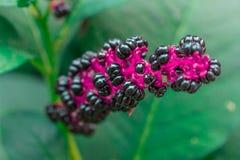 Kwiat który chce jeść Zdjęcia Stock