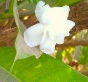 Kwiat który jak patrzeje wzrastał obraz stock